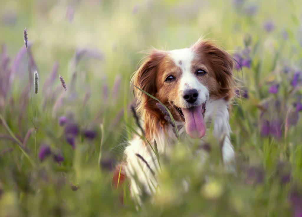 propreté canine